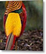 Golden Pheasant Metal Print