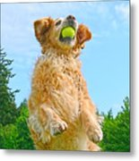 Golden Retriever Catch The Ball  Metal Print