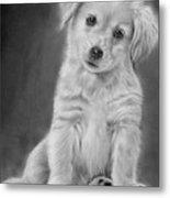 Golden Retriever Puppy Drawing Metal Print