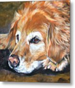 Golden Retriever Senior Metal Print
