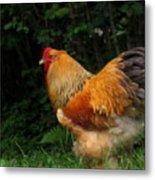 Golden Rooster Metal Print