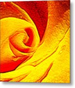 Golden Rose Metal Print