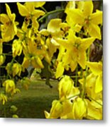 Golden Shower Tree Metal Print