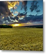 Golden Skies. Metal Print