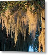 Golden Spanish Moss Metal Print