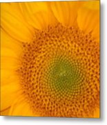 Golden Sunflower Metal Print