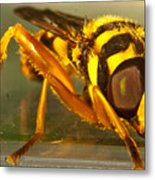 Golden Syrphid Metal Print