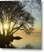 Golden Tranquility - Lacy Tree Silhouettes On The Lake Shore Metal Print