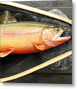 Golden Trout River Slice Metal Print by Eric Knowlton