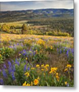 Golden Valley Metal Print