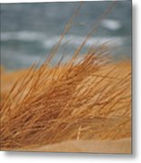Golden View Metal Print