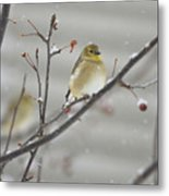 Golden With Snow Metal Print