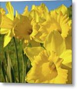 Golden Yellow Daffodil Flower Garden Art Prints Baslee Troutman Metal Print
