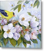 Goldfinch And Crabapple Blossoms Metal Print