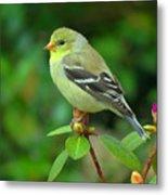 Goldfinch On Green Metal Print