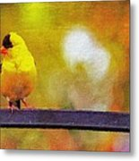 Goldfinch Sitting Pretty Metal Print