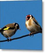 Goldfinch Spring  Metal Print