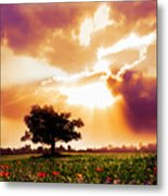 Golds At Sunset After The Rain Metal Print