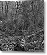 Goldstream Provincial Park Black And White Metal Print