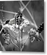 Gone To Seed Berries And Vines Metal Print