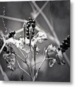Gone To Seed Berries And Vines Metal Print