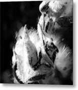 Gone To Seed Milkweed 1 Metal Print