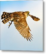 Good Hawk Hunting Metal Print