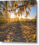 Good Morning At The Oak Metal Print