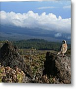 Good Morning Maui Metal Print