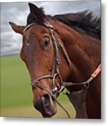 Good Morning - Racehorse On The Gallops Metal Print