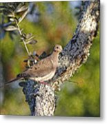 Good Mourning Dove By H H Photography Of Florida Metal Print