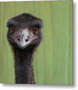 Goofing Around Emu Metal Print