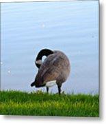 Goose #1 Pose Metal Print