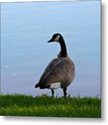 Goose #2 Pose Metal Print