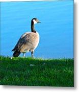 Goose #3 Pose Metal Print