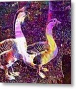 Goose Birds Waterfowl Nature  Metal Print