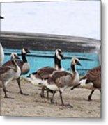 Goose Crossing Mayville Park Metal Print