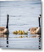 Goose Family Metal Print
