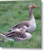 Goose Lookout Metal Print