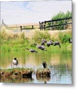 Goose Pond Metal Print