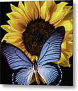 Gorgeous Blue Butterfly Metal Print