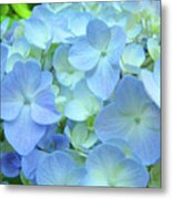 Gorgeous Blue Colorful Floral Art Hydrangea Flowers Baslee Troutman Metal Print