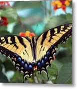 Gorgeous Butterfly Metal Print