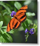Gorgeous Close Up Of An Oak Tiger Butterfly In Nature Metal Print