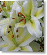 Gorgeous Cluster Of Blooming White Lilies In A Bouquet Metal Print