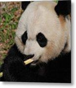 Gorgeous Face Of A Giant Panda Bear With Bamboo Metal Print