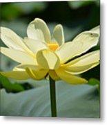 Gorgeous Lotus Flower Metal Print