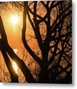 Gorgeous Morning Through The Tree Screen Metal Print