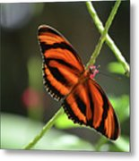 Gorgeous Orange And Black Oak Tiger Butterfly Metal Print