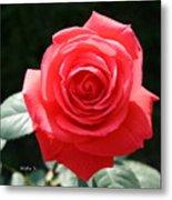 Gorgeous Rose Metal Print
